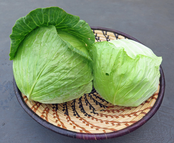 Tendersweet and KY Cross cabbage