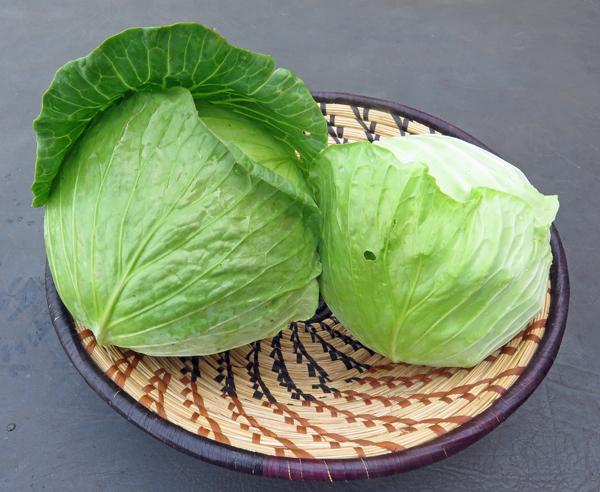 Tendersweet and KY Cross cabbage
