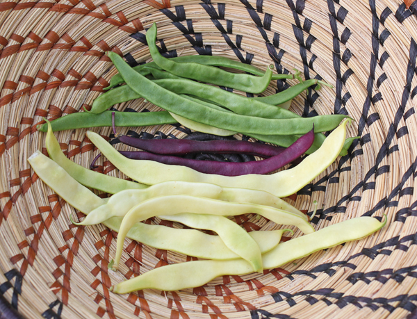 Musica, Trionfo Violetto and Gold Marie pole beans