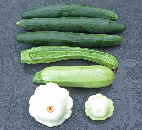 cucumbers and squash