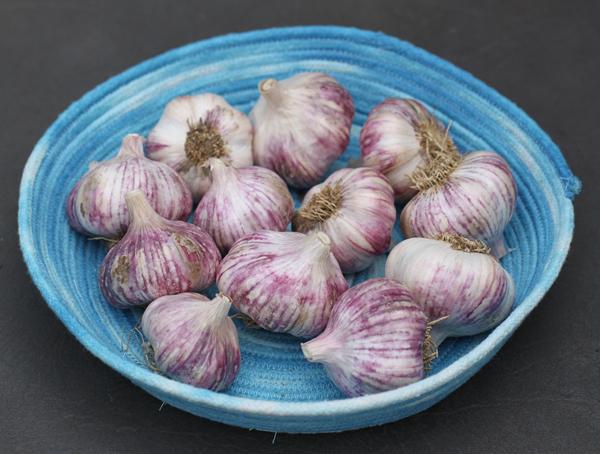 Xian garlic