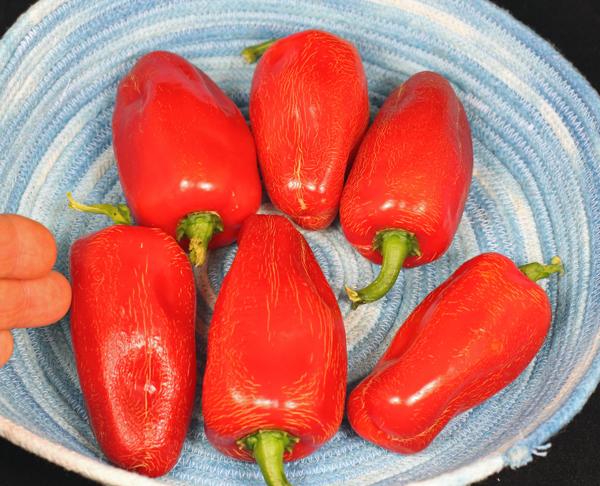 ripe Celia Dulce peppers