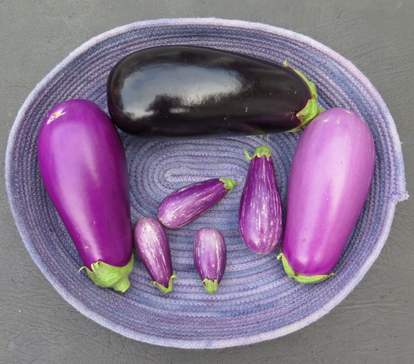 Nadia, Dancer and Fairy Tale eggplant
