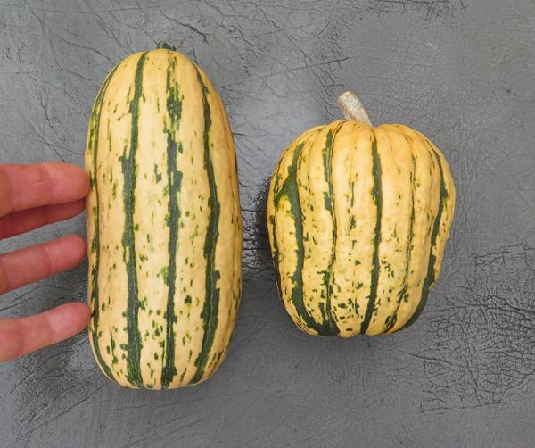 Honeyboat (L) and Sugar Loaf(R) Delicata squash