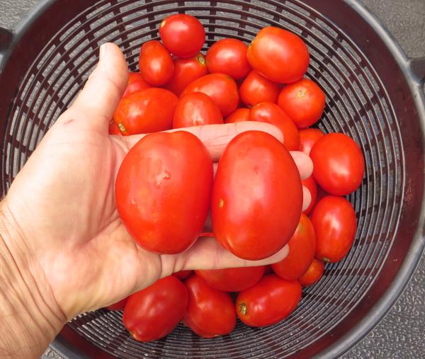 Viva Italia paste tomatoes