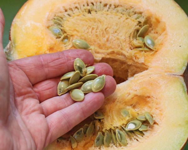 inside of Pepitas Pumpkin