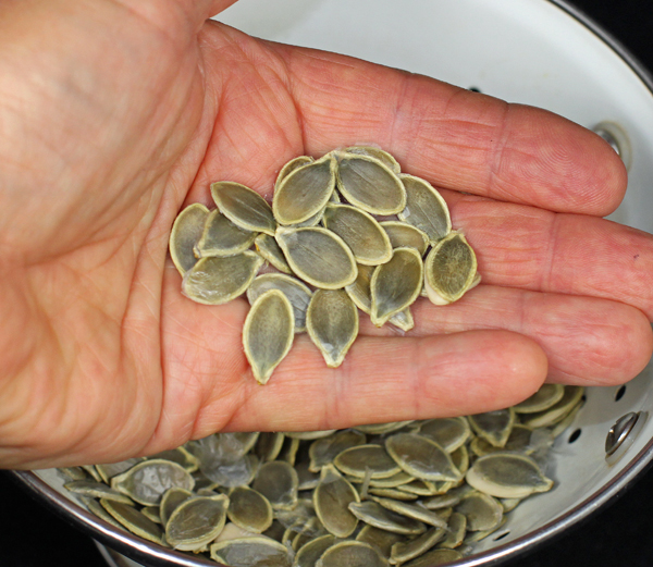 dried Pepitas seeds
