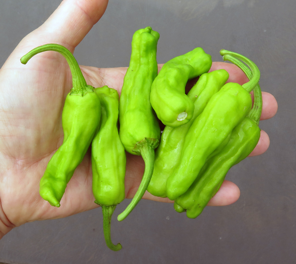 pepperoncino peppers