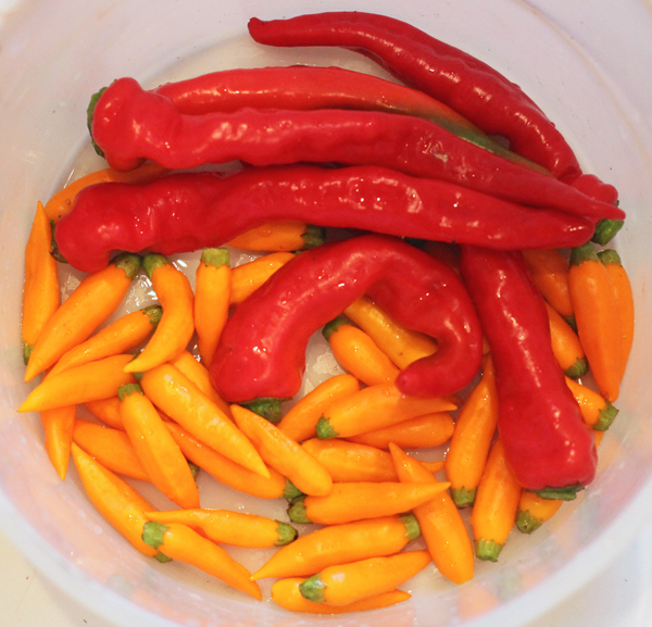 Maule's Red Hot and Aji Amarillo peppers for fermenting