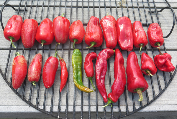 peppers for smoking