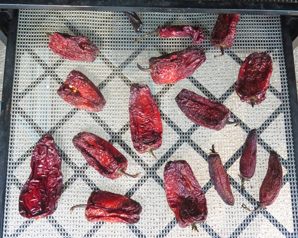 drying the smoked peppers