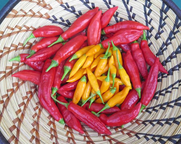 Aji Angelo and Baby Aji Amarillo peppers