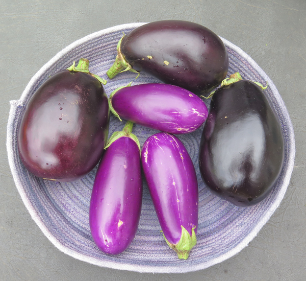 Nadia, Galine and Dancer eggplant