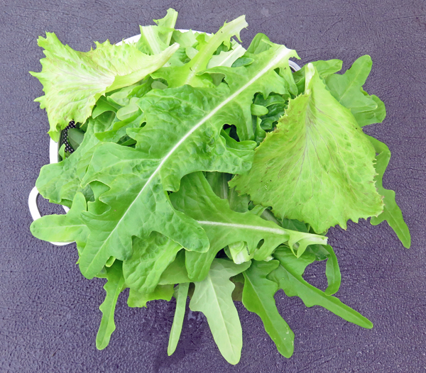 mixed lettuces