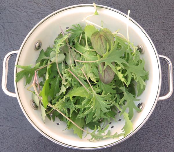 cutting of micro greens