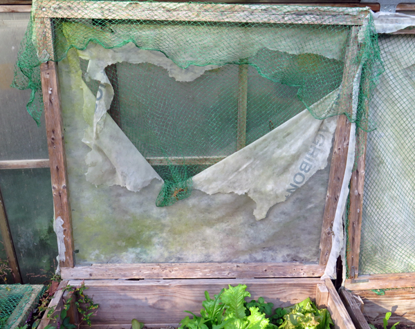 cold frame covers need replacing