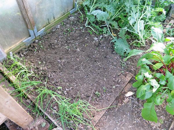 left side greenhouse bed
