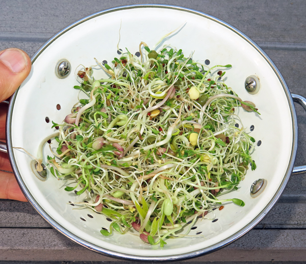 Zesty Dutch sprouts mix