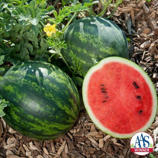 Watermelon Mini Love