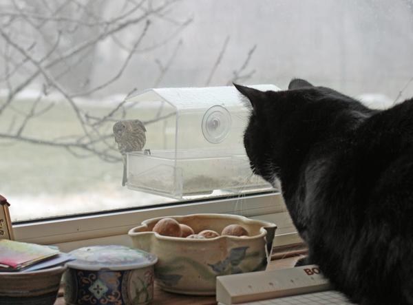 Ace busy bird watching