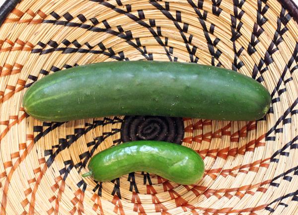 Corinto and Picolino cucumbers