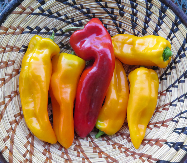 Escamilllo, Carmen and Cornito Giallo peppers