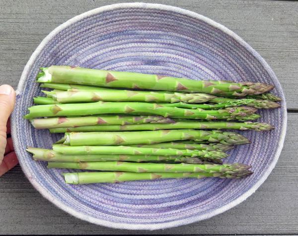 Saturday cutting of asparagus