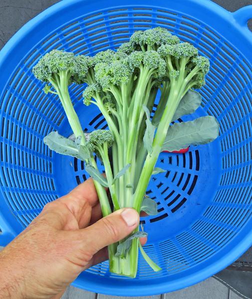 Artwork broccoli
