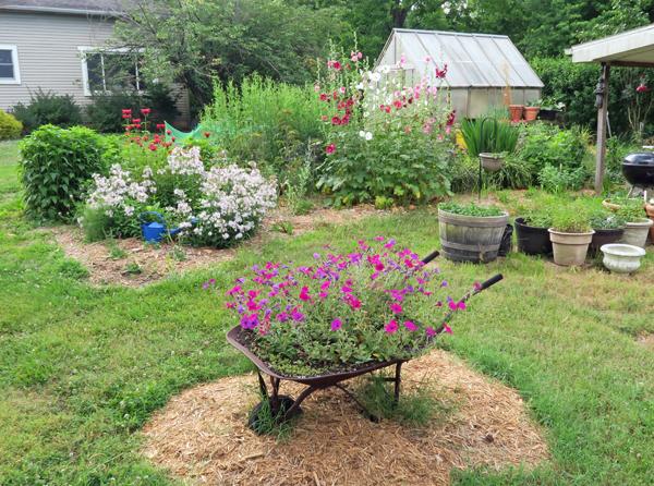 the Wild Garden in June