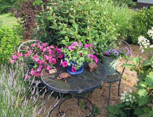 pots of Wave petunias