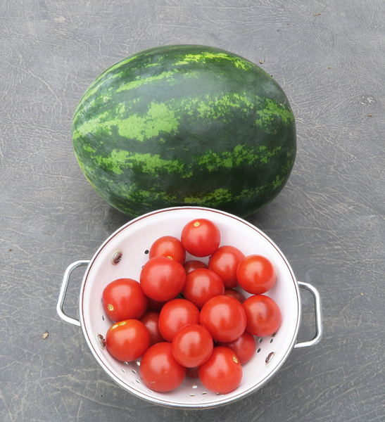 Mini Love watermelon and Midnight Snack tomato