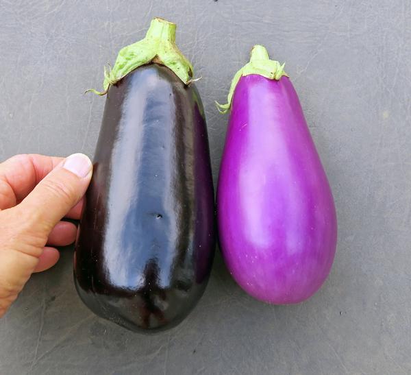 Nadia and Dancer eggplant