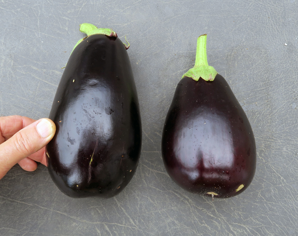 Nadia(L) and Galine(R) eggplant
