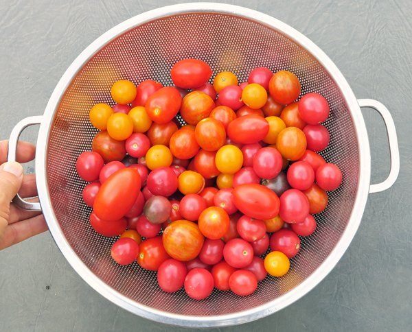 small fruited tomatoes for dehydrating