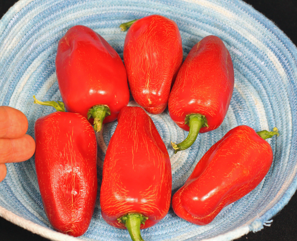 rogue Celia Dulce peppers