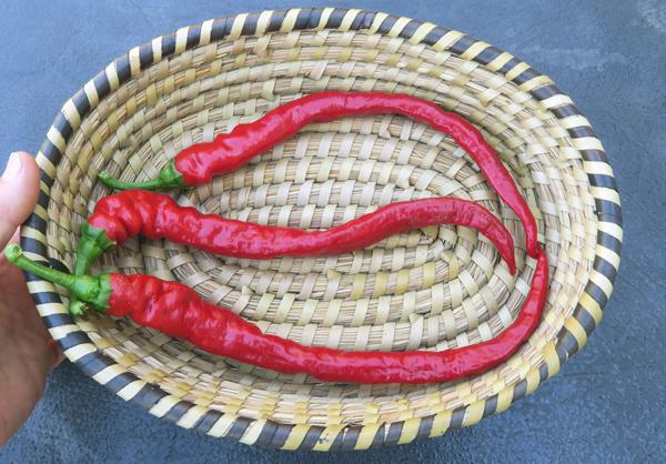 Doux Des Landes peppers