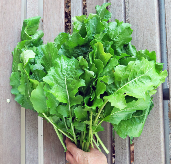 Topper turnip greens