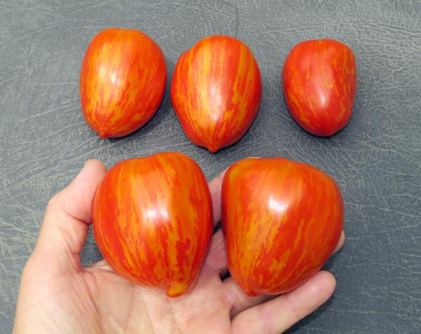 rogue Marzano Fire tomatoes