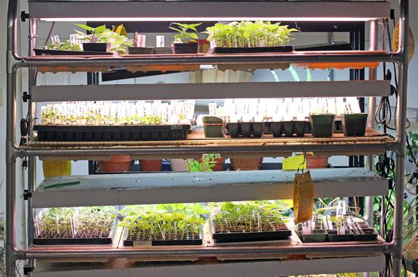 light garden in April