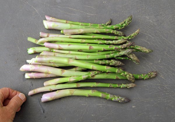 almost a pound of asparagus