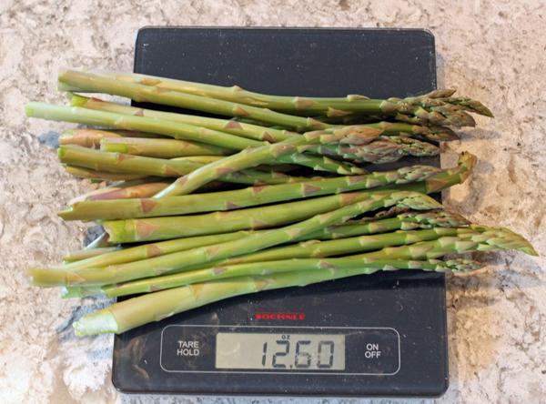 daily asparagus harvest