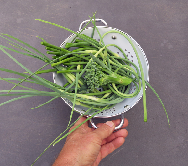 garlic scapes and Apollo broccoli