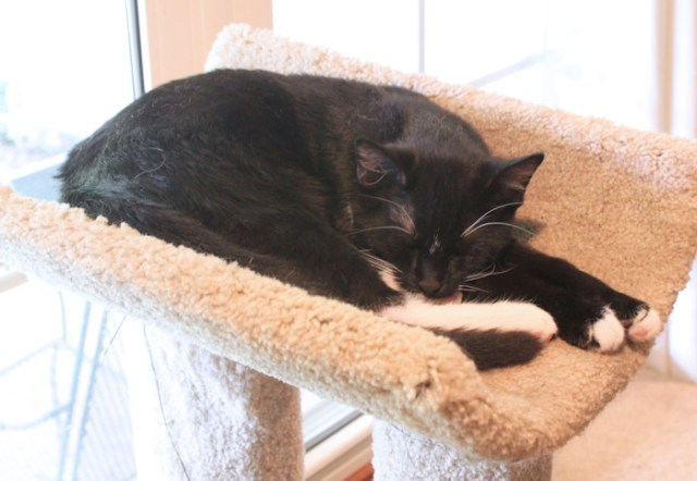 Ace sleeping on cat condo