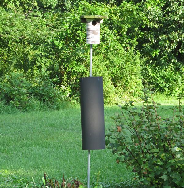 PVC nest box on pole with predator guard