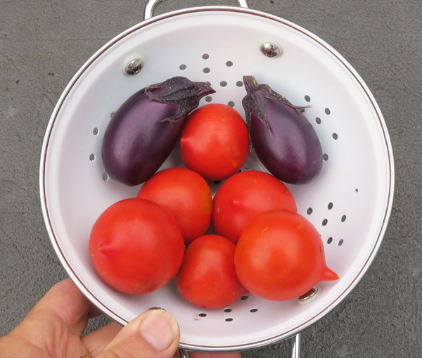 Red Racer tomatoes and Patio Baby eggplants