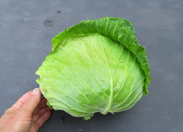 Tendersweet cabbage
