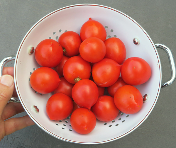 Red Racer tomatoes