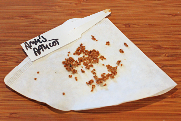 drying tomato seeds