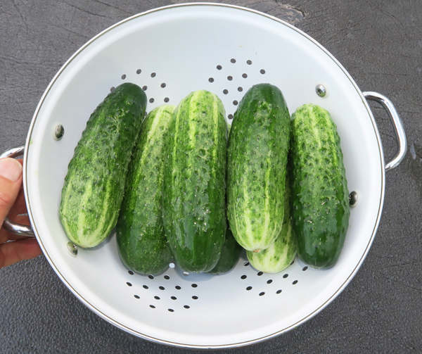 Vertina cucumbers