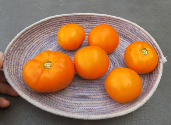 Chef's Choice Orange tomatoes